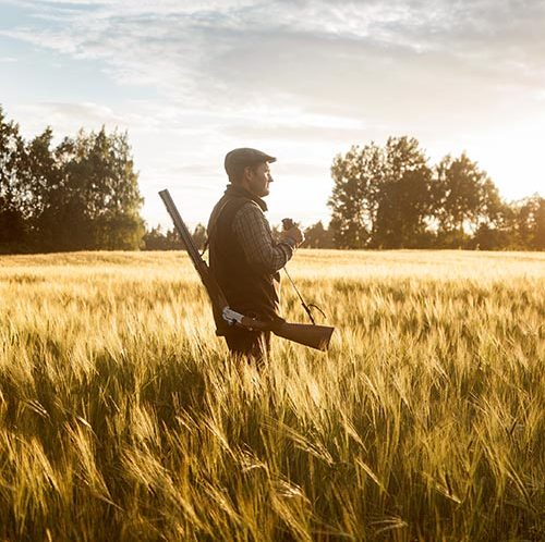 Hunter stalking prey through wheat fields
